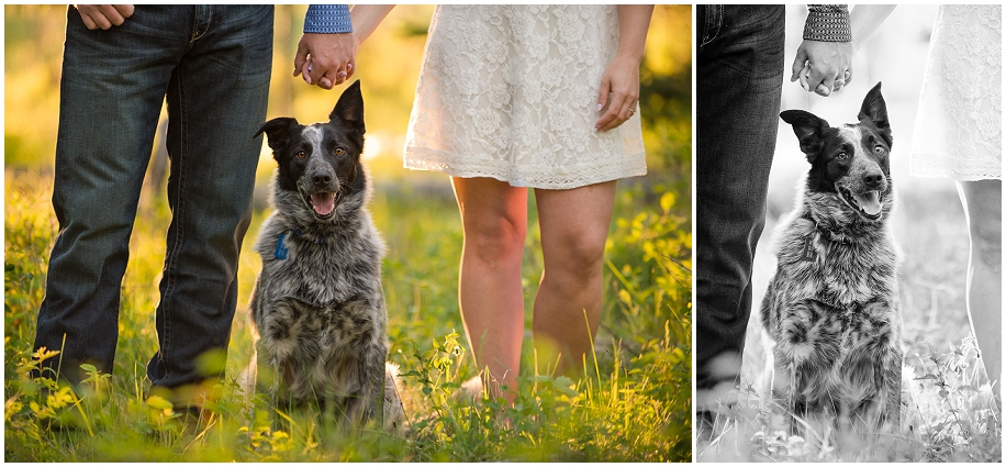 Kamloops engagement photographer golden hour sunshine puppy dog