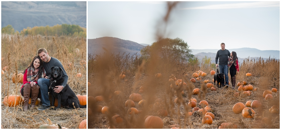 Kamloops engagement photographer in the  Tranquille pumpkin patch fur baby fall romance