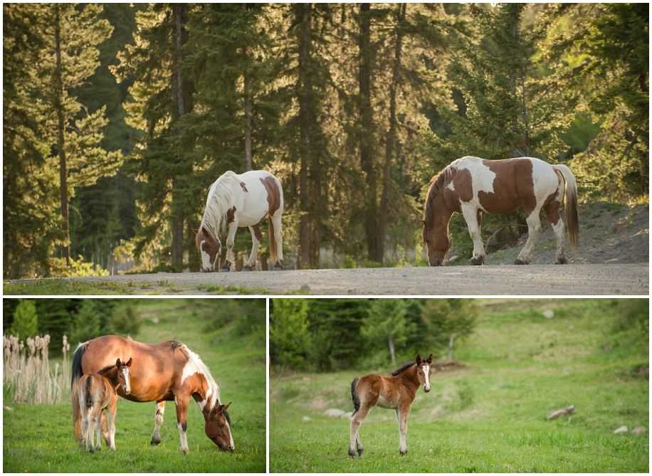 Kamloops photographer Harper Mountain wild horses