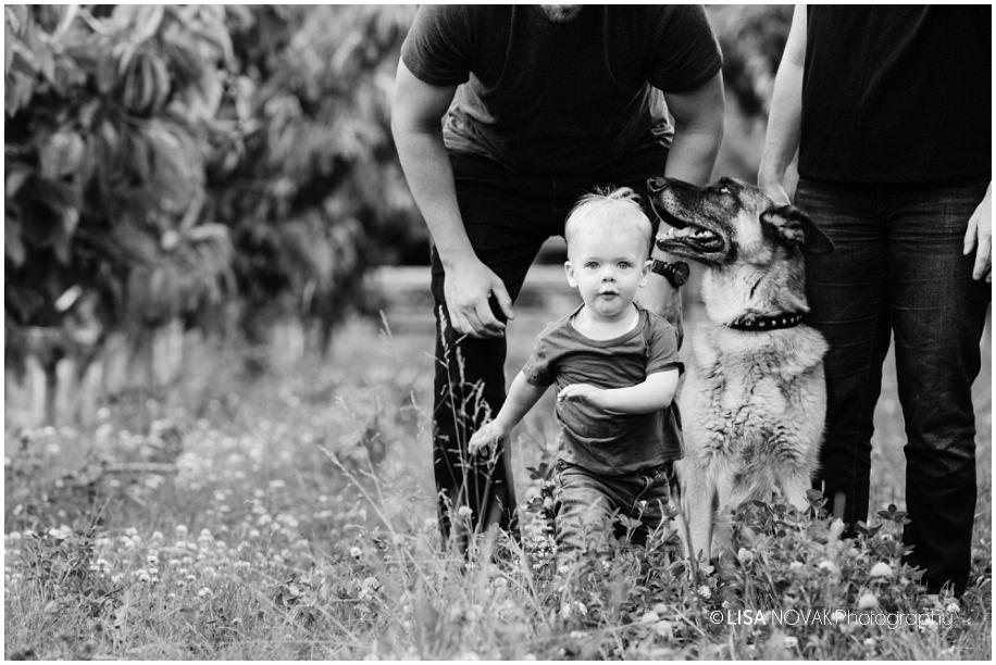 Okanagan lifestyle family session apple orchard toddler Summerland photographer black white furbaby german shephard