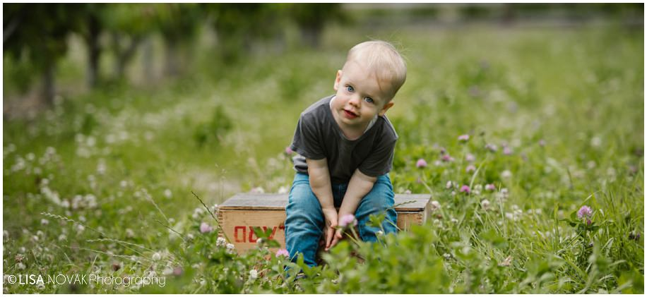 Okanagan lifestyle family session apple orchard toddler Summerland photographer portrait grass toddler