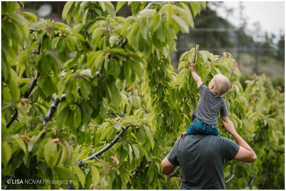 Okanagan lifestyle family session apple orchard teddy bear Summerland BC photographer candid