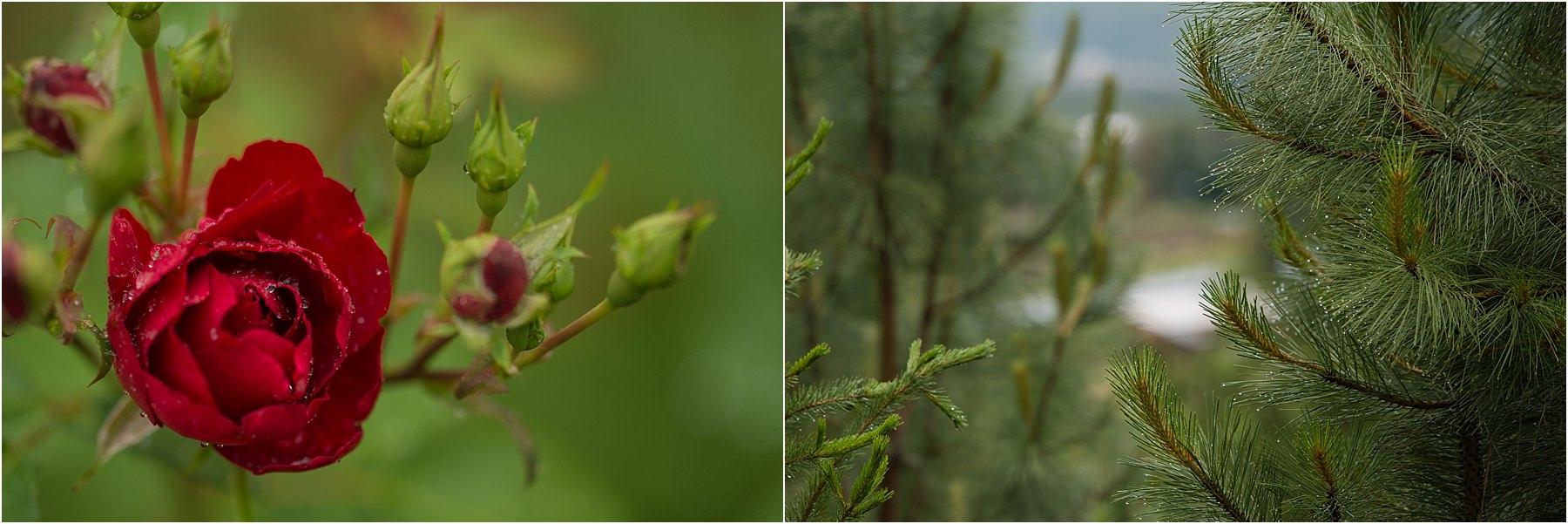 Okanagan wedding photographer detail shots macro rose raindrops trees forest